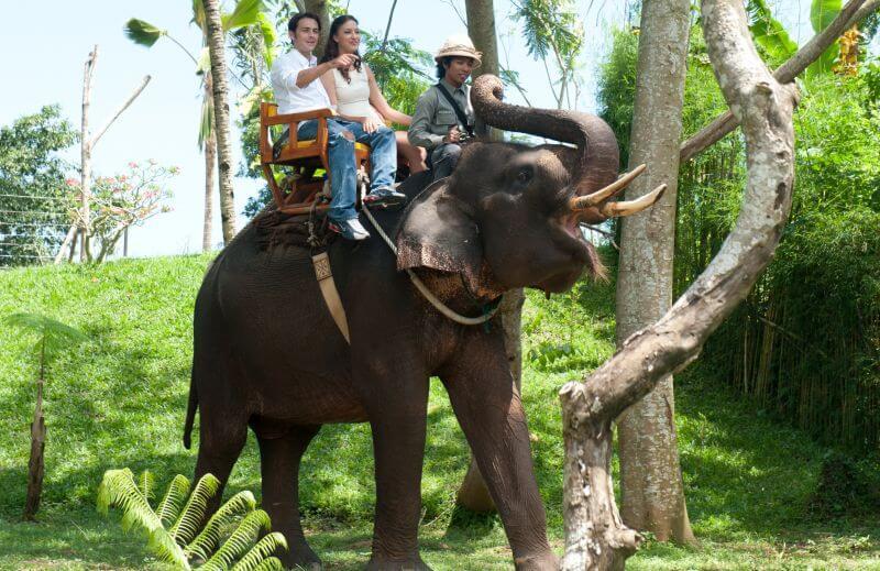 バリズー Elephant Expedition